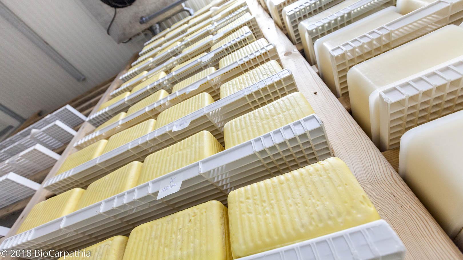 biocarpathia-parteneri-productie-milkom-24